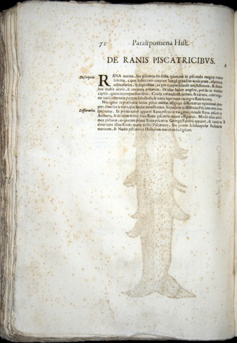 Image of Aldrovandi-1570-z072