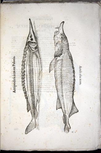 Image of Aldrovandi-1570-z075