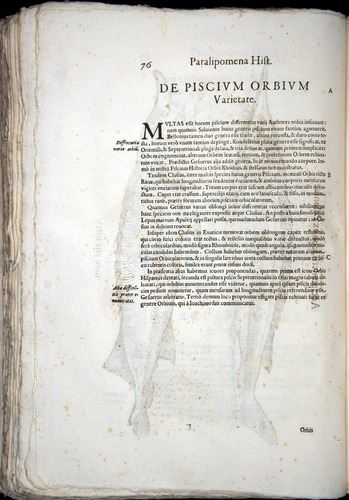 Image of Aldrovandi-1570-z076