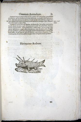 Image of Aldrovandi-1570-z081