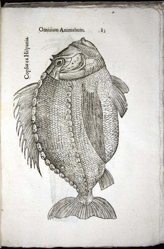 Image of Aldrovandi-1570-z083