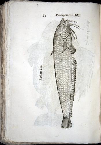 Image of Aldrovandi-1570-z084