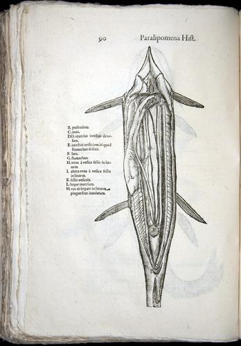 Image of Aldrovandi-1570-z090