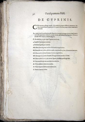 Image of Aldrovandi-1570-z092