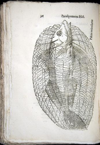 Image of Aldrovandi-1570-z096