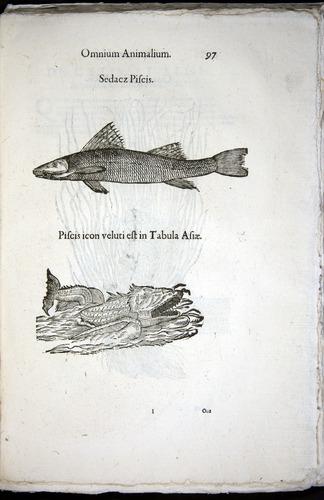 Image of Aldrovandi-1570-z097