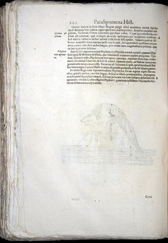 Image of Aldrovandi-1570-z100