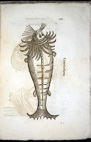 Image of Aldrovandi-1570-z101