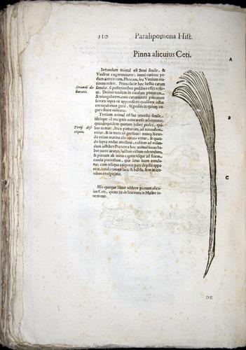Image of Aldrovandi-1570-z110