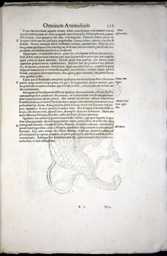 Image of Aldrovandi-1570-z111