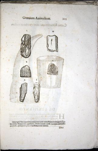 Image of Aldrovandi-1570-z115