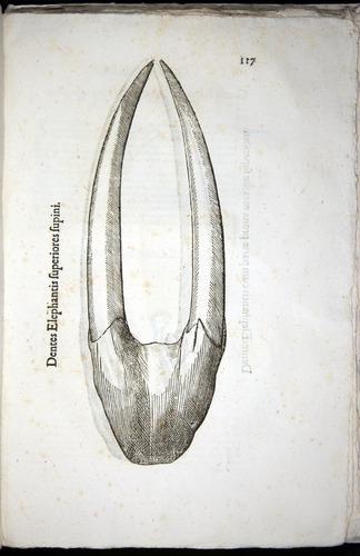 Image of Aldrovandi-1570-z117