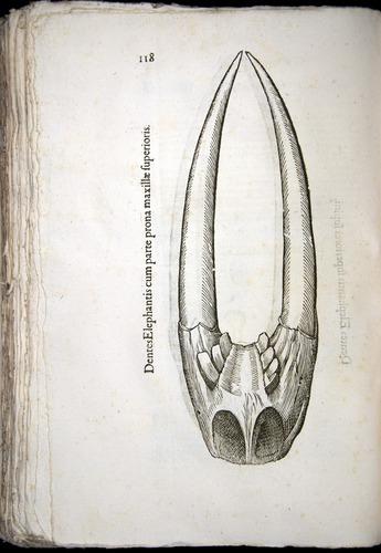 Image of Aldrovandi-1570-z118