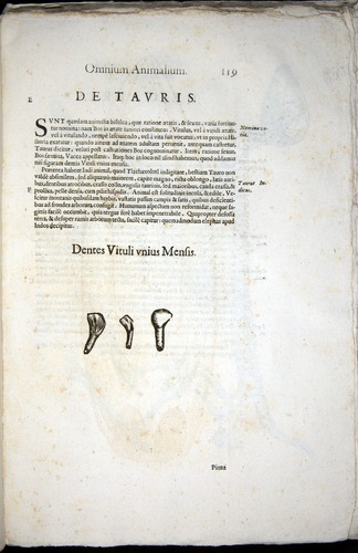 Image of Aldrovandi-1570-z119