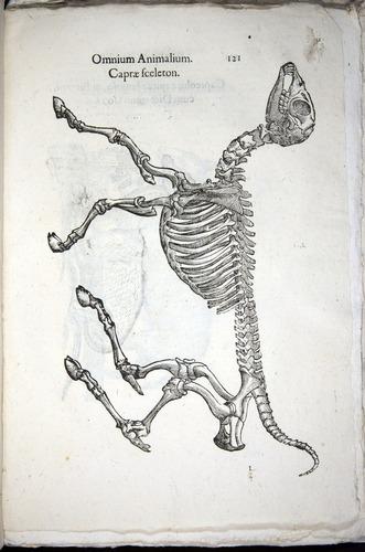 Image of Aldrovandi-1570-z121