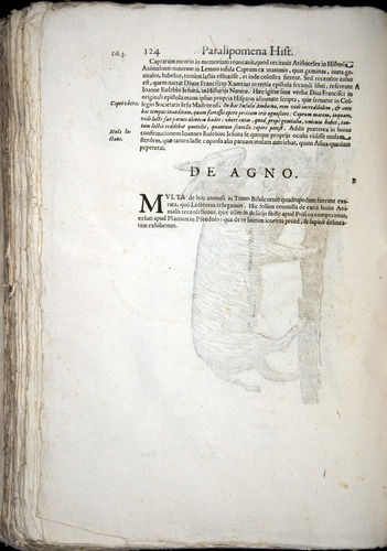 Image of Aldrovandi-1570-z124