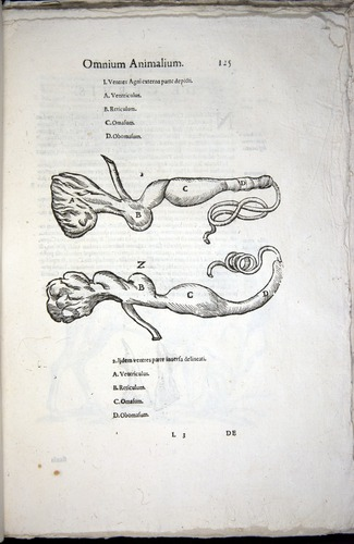 Image of Aldrovandi-1570-z125