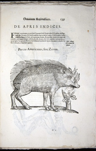 Image of Aldrovandi-1570-z135