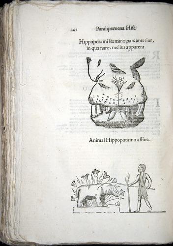 Image of Aldrovandi-1570-z142