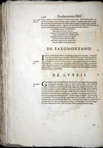 Image of Aldrovandi-1570-z146