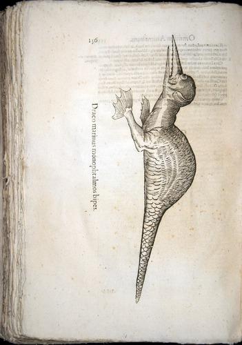 Image of Aldrovandi-1570-z156