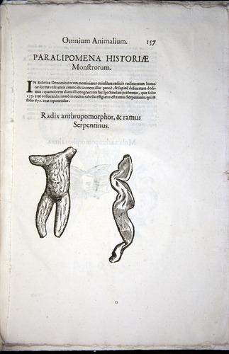 Image of Aldrovandi-1570-z157