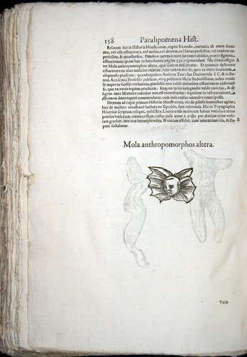 Image of Aldrovandi-1570-z158
