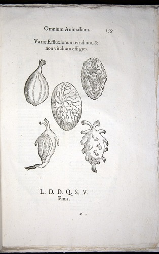 Image of Aldrovandi-1570-z159