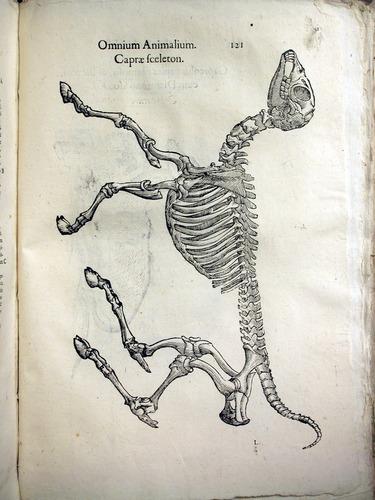 Image of Aldrovandi-1642-121