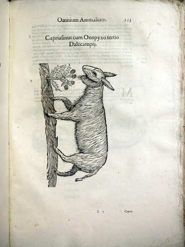 Image of Aldrovandi-1642-123
