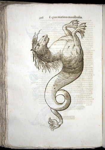 Image of Aldrovandi-1642-356