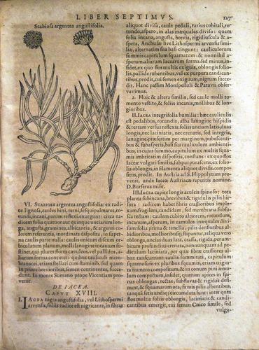 Image of Bauhin-1671-q4r