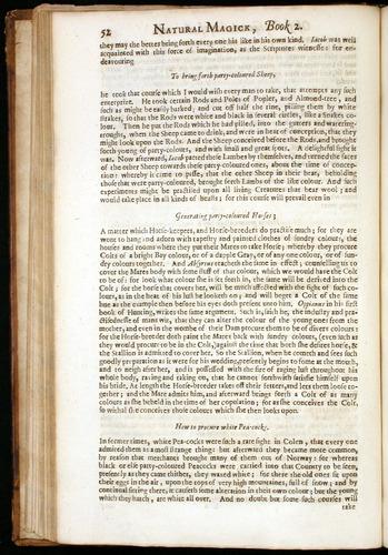 Image of DellaPorta-1658-052