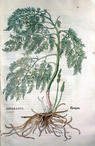 Image of Fuchs-1542-058
