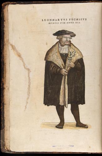 Image of Fuchs-1542-000-za01v