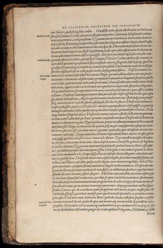 Image of Fuchs-1542-000-za05v