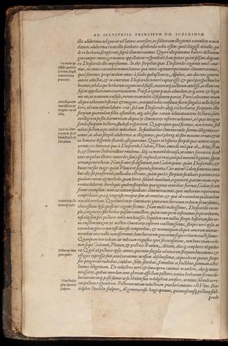 Image of Fuchs-1542-000-za06v