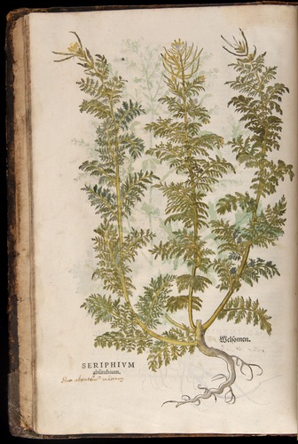 Image of Fuchs-1542-002