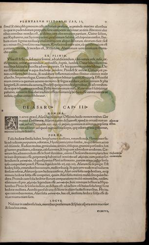 Image of Fuchs-1542-009