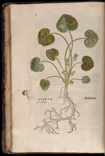 Image of Fuchs-1542-010