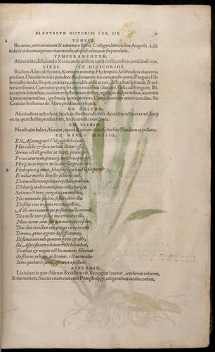 Image of Fuchs-1542-011