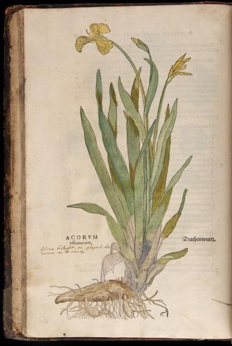 Image of Fuchs-1542-012