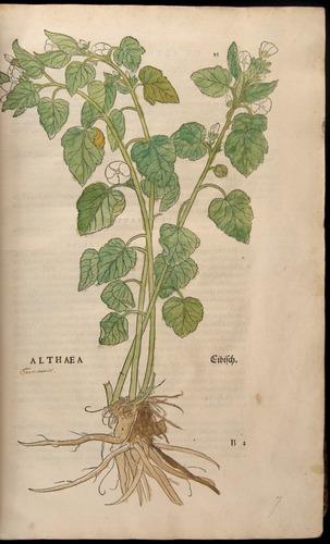 Image of Fuchs-1542-015
