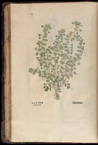 Image of Fuchs-1542-022