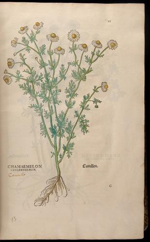 Image of Fuchs-1542-025