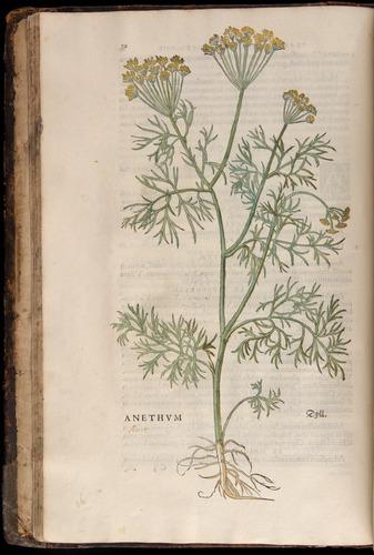 Image of Fuchs-1542-030