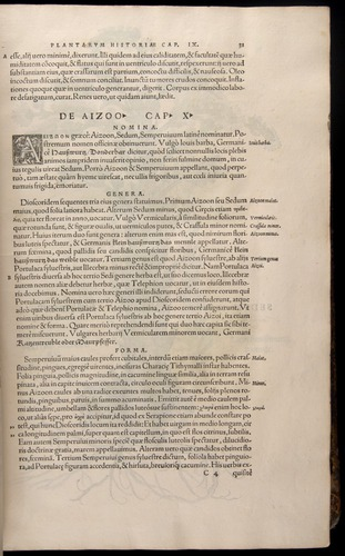 Image of Fuchs-1542-031