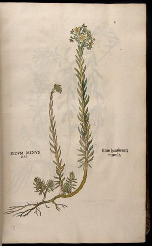 Image of Fuchs-1542-033