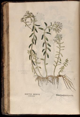 Image of Fuchs-1542-035