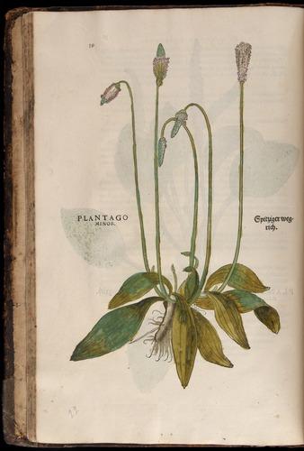Image of Fuchs-1542-039